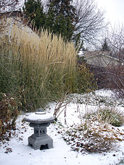 Stay at home and save while making the most of your garden this winter